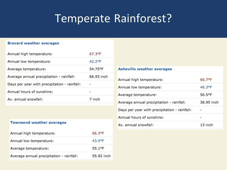 Temperate Rainforest?