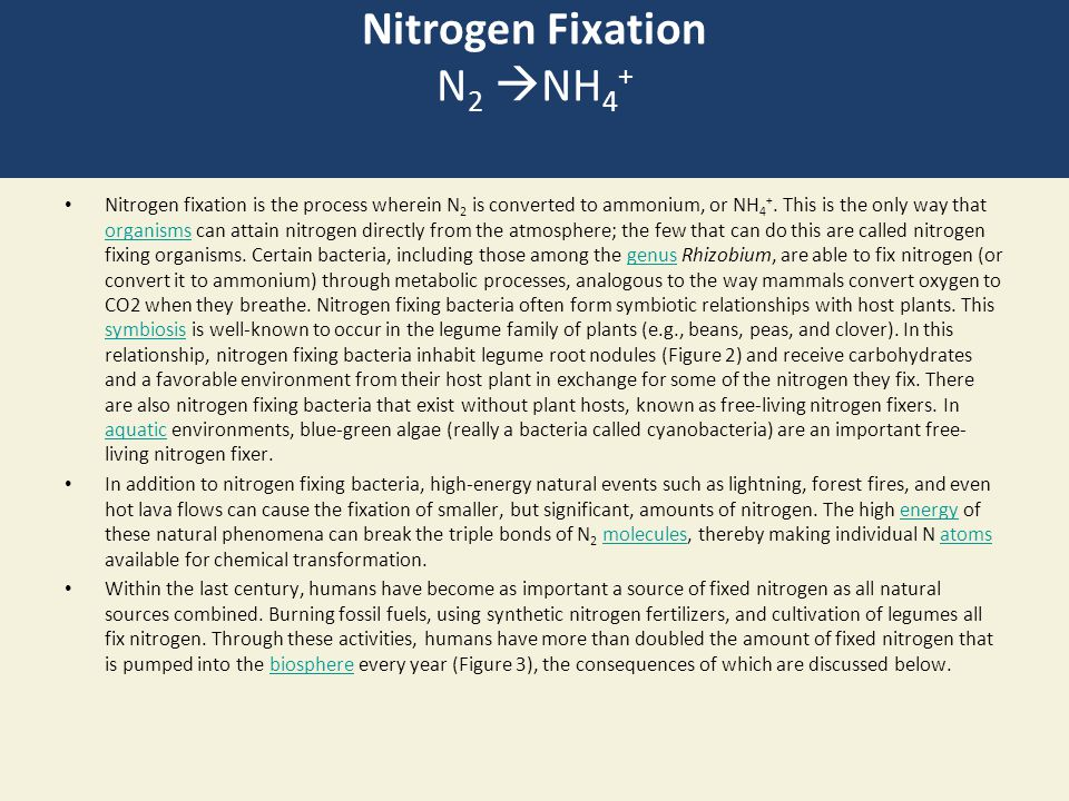 Nitrogen Fixation N 2  NH 4 + Nitrogen fixation is the process wherein N 2 is converted to ammonium, or NH 4 +.