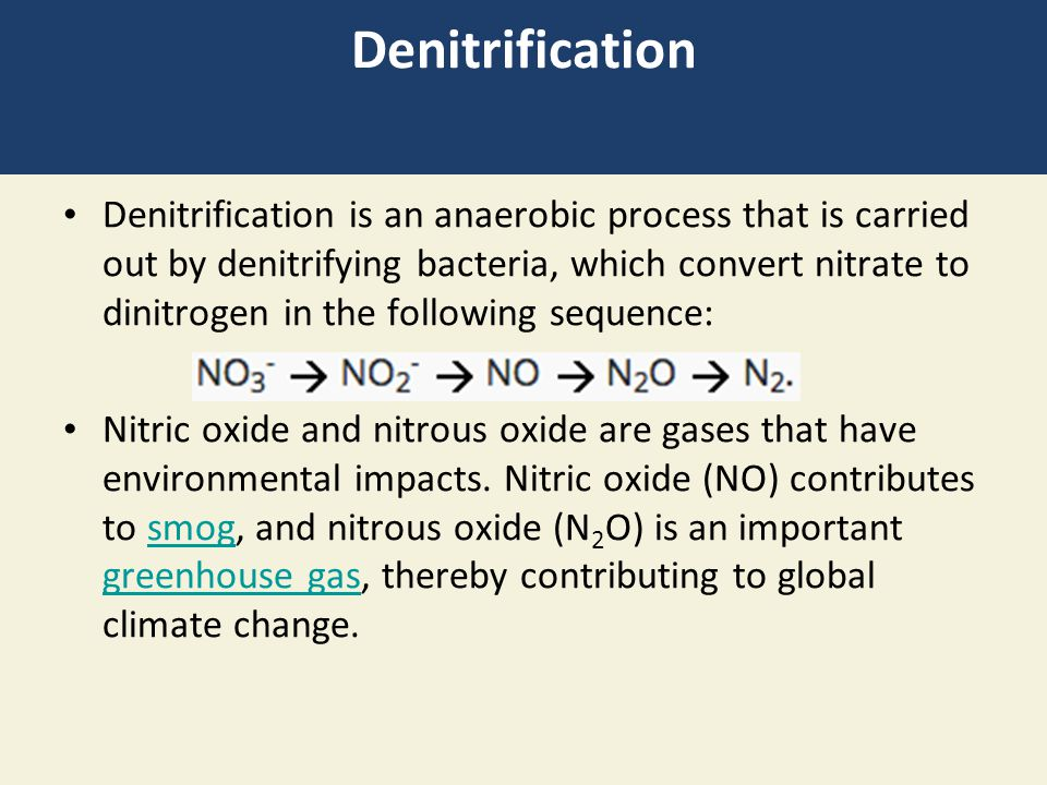 Denitrification Denitrification is an anaerobic process that is carried out by denitrifying bacteria, which convert nitrate to dinitrogen in the following sequence: Nitric oxide and nitrous oxide are gases that have environmental impacts.