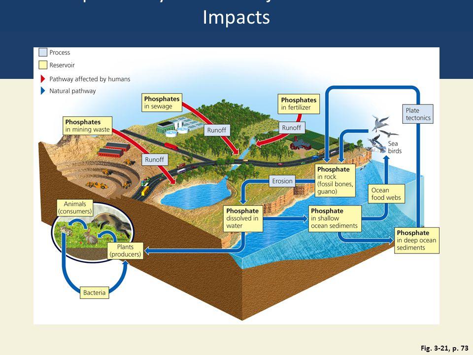 Phosphorus Cycle with Major Harmful Human Impacts Fig. 3-21, p. 73