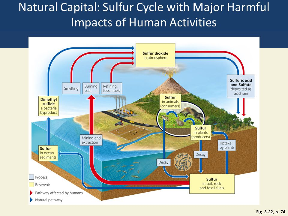 Natural Capital: Sulfur Cycle with Major Harmful Impacts of Human Activities Fig. 3-22, p. 74
