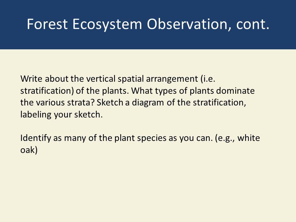Forest Ecosystem Observation, cont.Write about the vertical spatial arrangement (i.e.