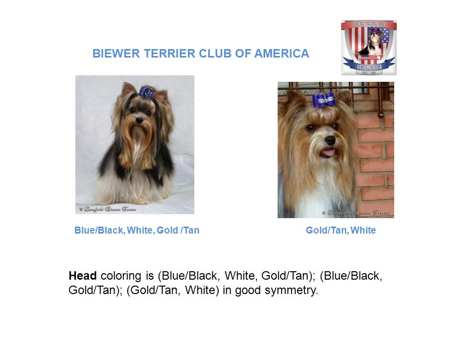 Head coloring is (Blue/Black, White, Gold/Tan); (Blue/Black, Gold/Tan); (Gold/Tan, White) in good symmetry.