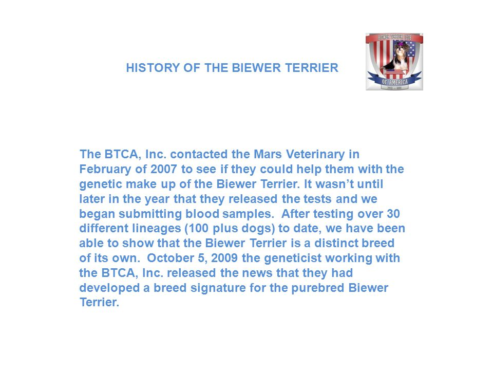 The BTCA, Inc. contacted the Mars Veterinary in February of 2007 to see if they could help them with the genetic make up of the Biewer Terrier. It was