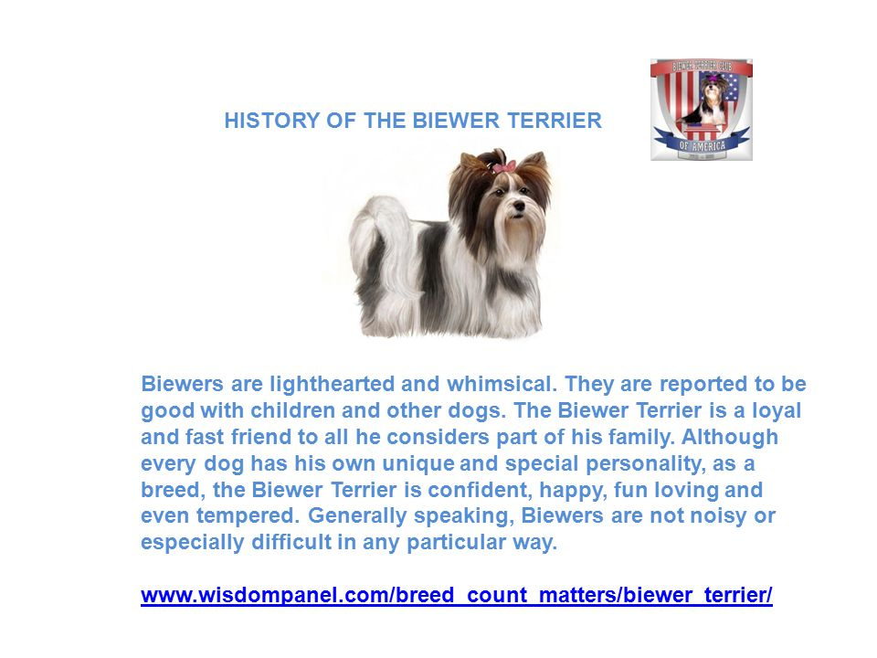 Biewers are lighthearted and whimsical. They are reported to be good with children and other dogs.