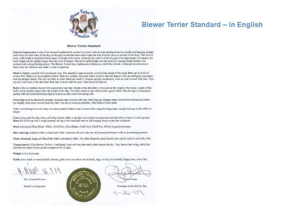 Biewer Terrier Standard – in English