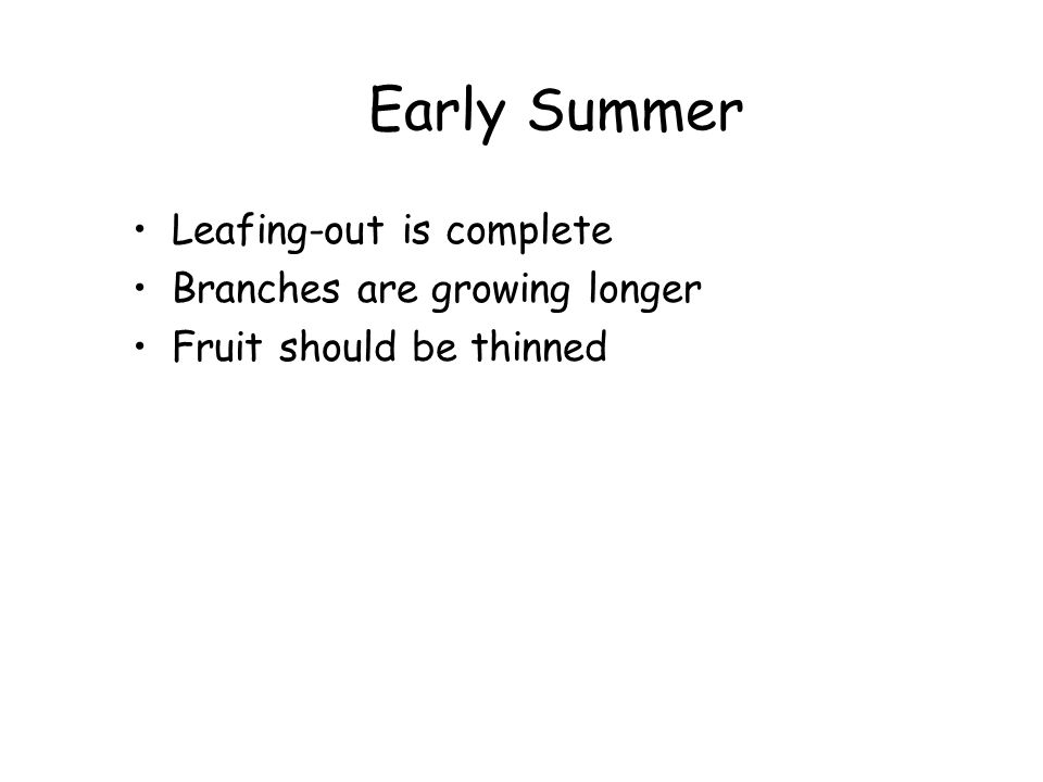 Mid to Late Summer Fruit are ripening Vegetative growth is slowing Next season's flower buds are beginning to forming