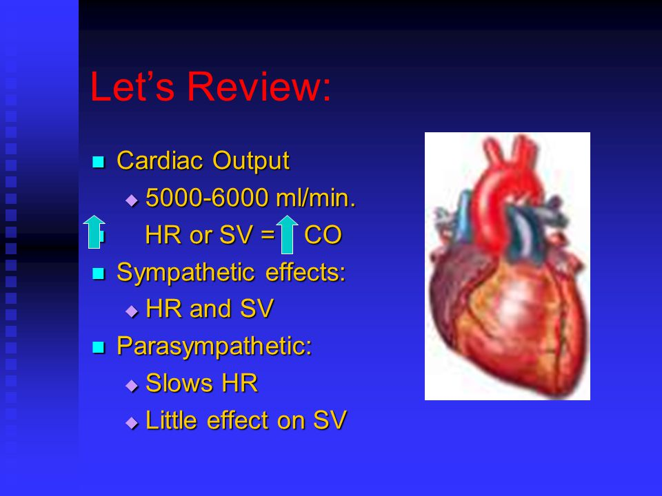 Let's Review: Cardiac Output Cardiac Output  5000-6000 ml/min.