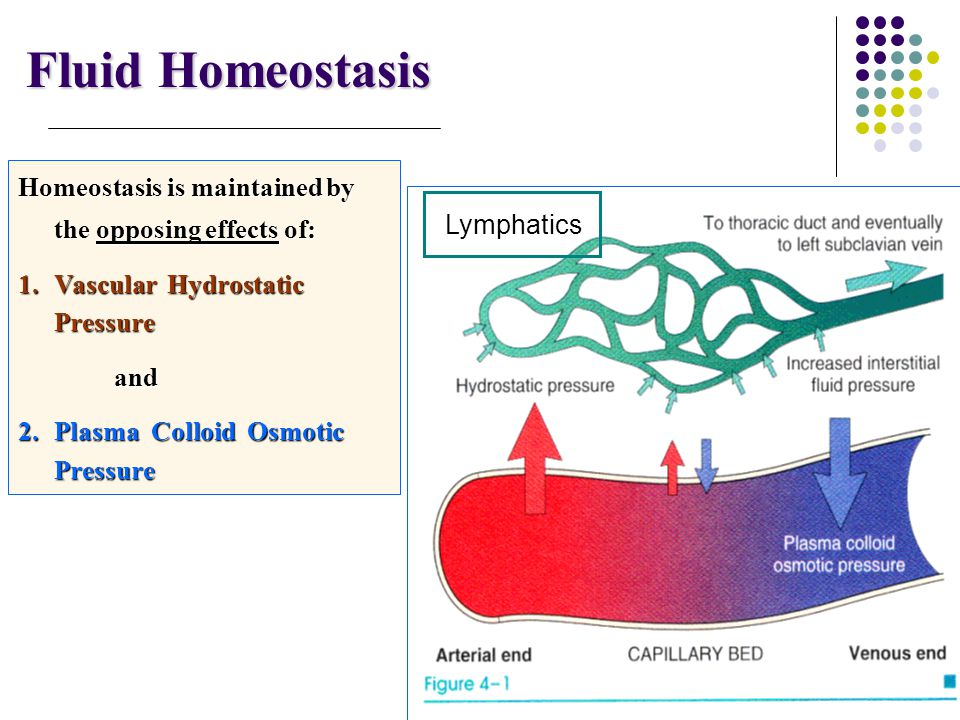 Fluid Homeostasis Homeostasis is maintained by the opposing effects of: 1.Vascular Hydrostatic Pressure and 2.Plasma Colloid Osmotic Pressure Lymphati