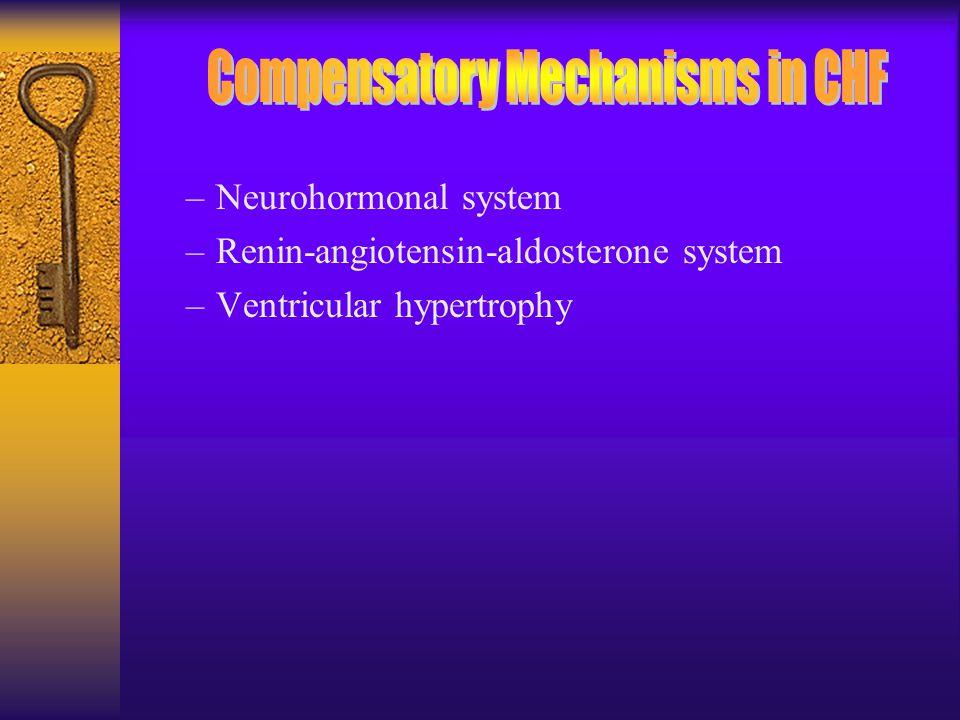 –Neurohormonal system –Renin-angiotensin-aldosterone system –Ventricular hypertrophy