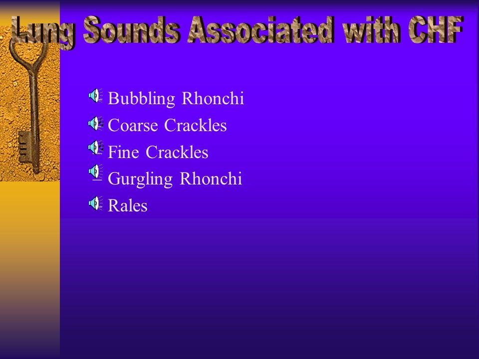 –Bubbling Rhonchi –Coarse Crackles –Fine Crackles –Gurgling Rhonchi –Rales