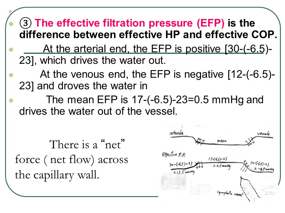 ③ The effective filtration pressure (EFP) is the difference between effective HP and effective COP. At the arterial end, the EFP is positive [30-(-6.5