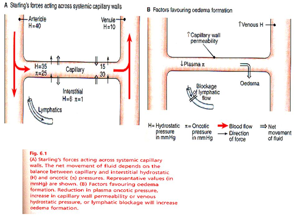 DIURETICS Site of action Carrier/channel inhibited % filtered Na mechanism excreted Proximal Tubule inhibits Enz.