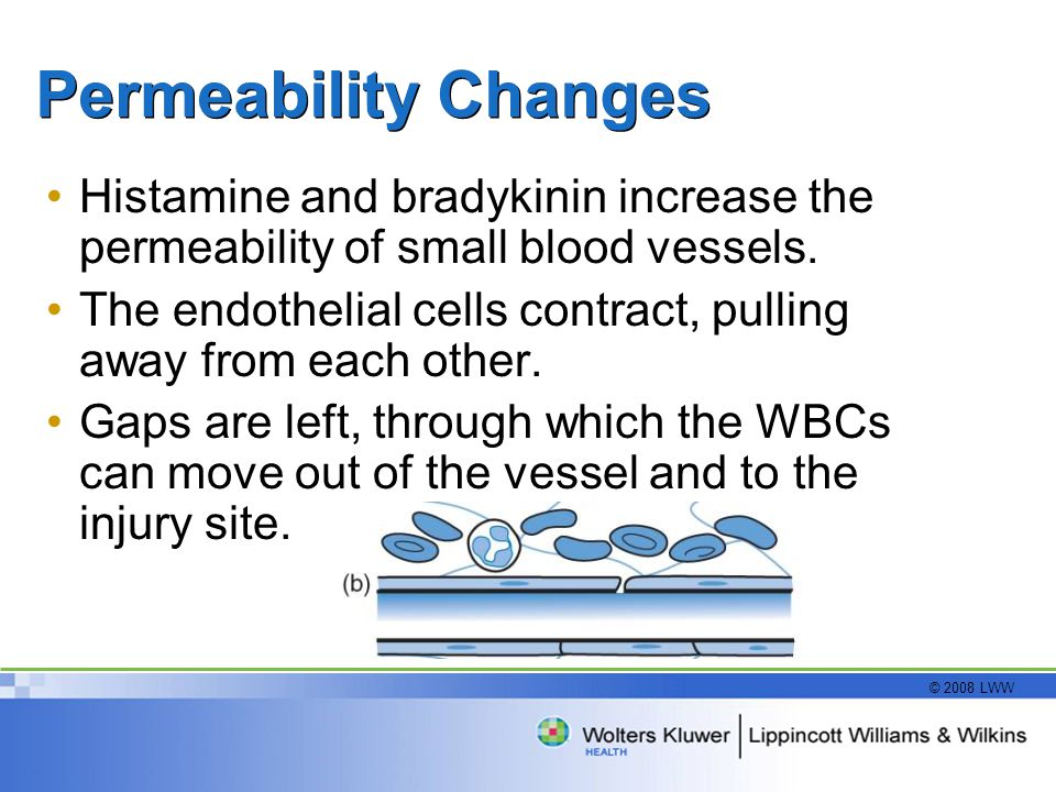 © 2008 LWW Permeability Changes Histamine and bradykinin increase the permeability of small blood vessels. The endothelial cells contract, pulling awa