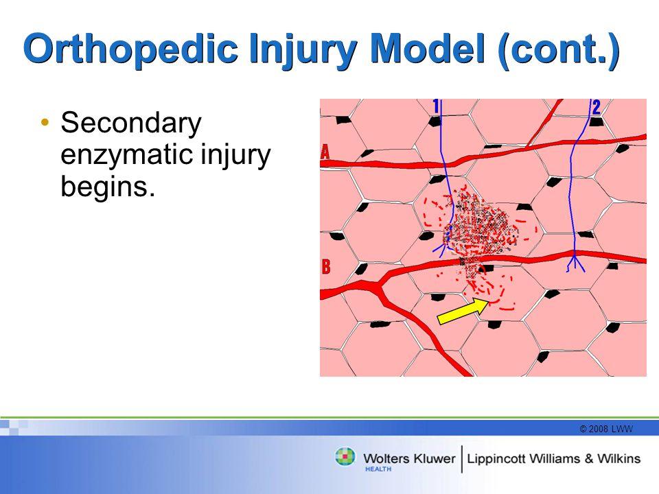 © 2008 LWW Orthopedic Injury Model (cont.) Secondary enzymatic injury begins.