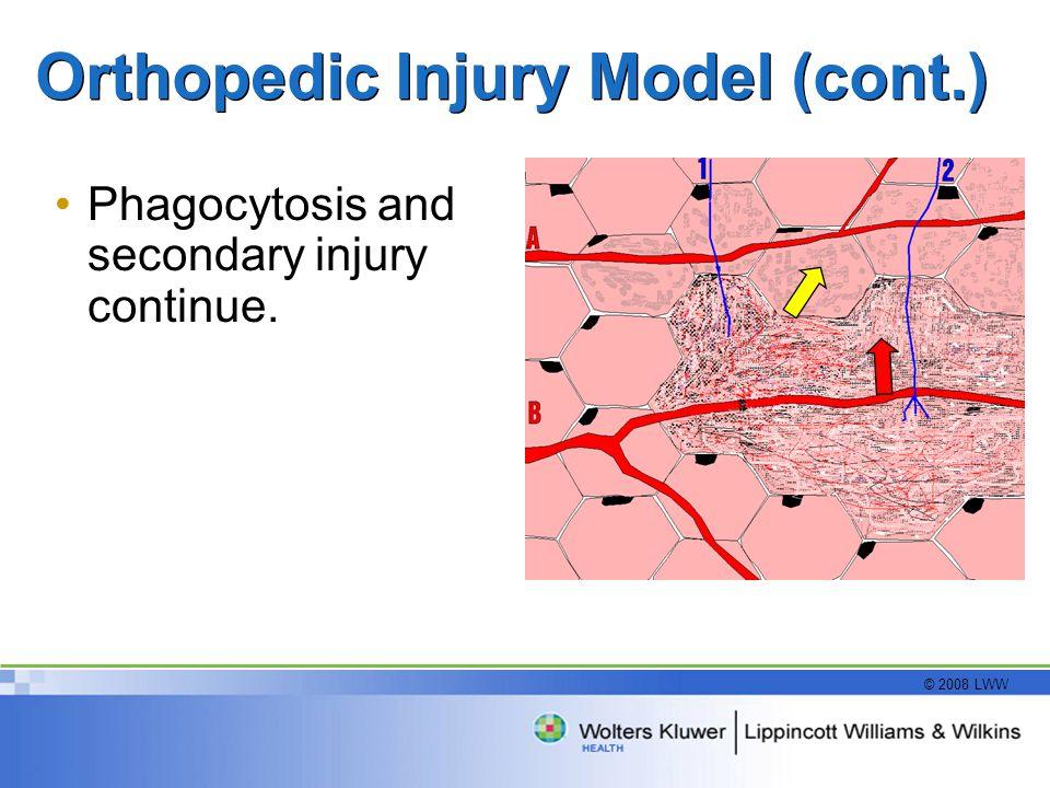 © 2008 LWW Orthopedic Injury Model (cont.) Phagocytosis and secondary injury continue.