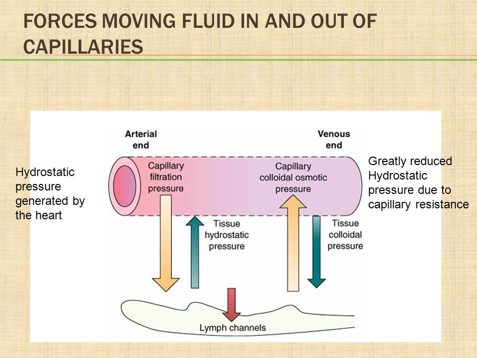 QUESTION What forces work to keep blood in the capillary.