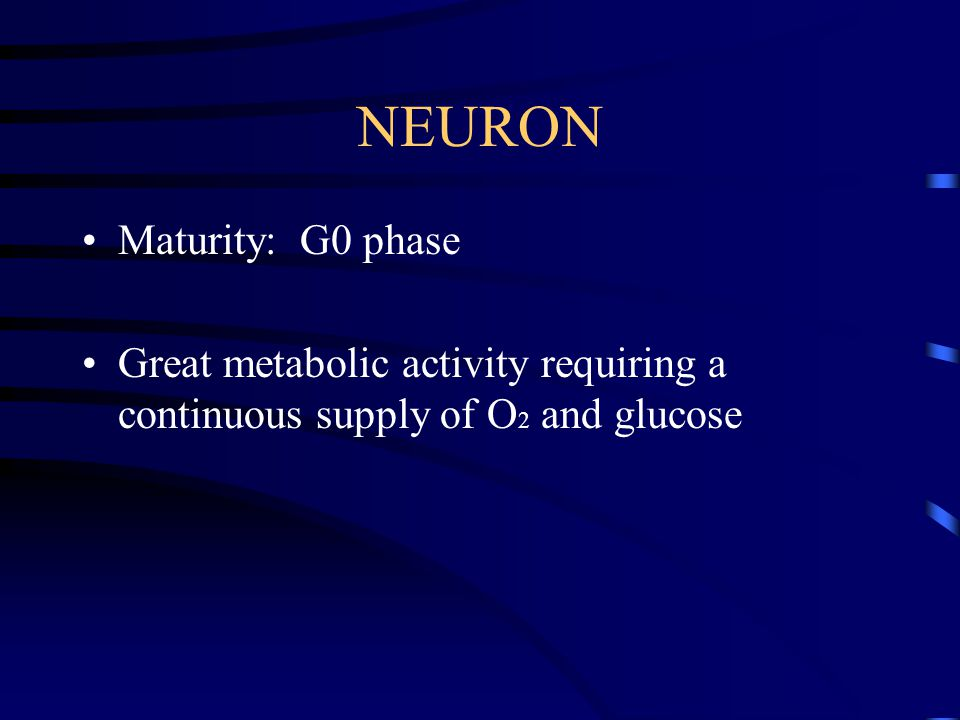 NEURON Maturity: G0 phase Great metabolic activity requiring a continuous supply of O 2 and glucose