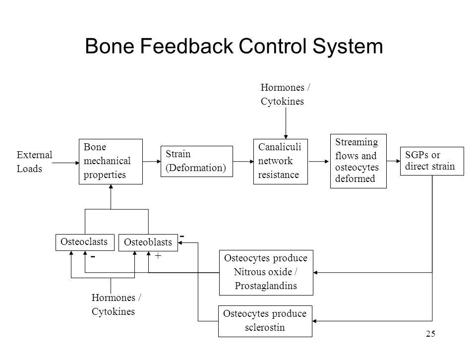 25 Bone Feedback Control System Bone mechanical properties Strain (Deformation) Canaliculi network resistance Osteocytes produce Nitrous oxide / Prost