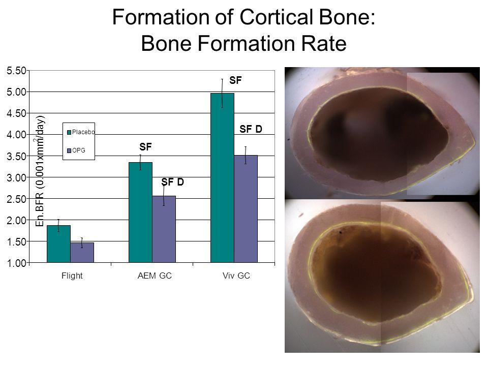 30 Formation of Cortical Bone: Bone Formation Rate SF SF D 1.00 1.50 2.00 2.50 3.00 3.50 4.00 4.50 5.00 5.50 FlightAEM GCViv GC En.BFR (0.001xmm 2 /da