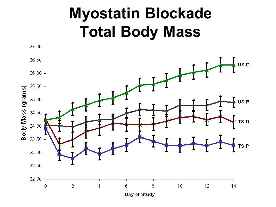38 Myostatin Blockade Total Body Mass