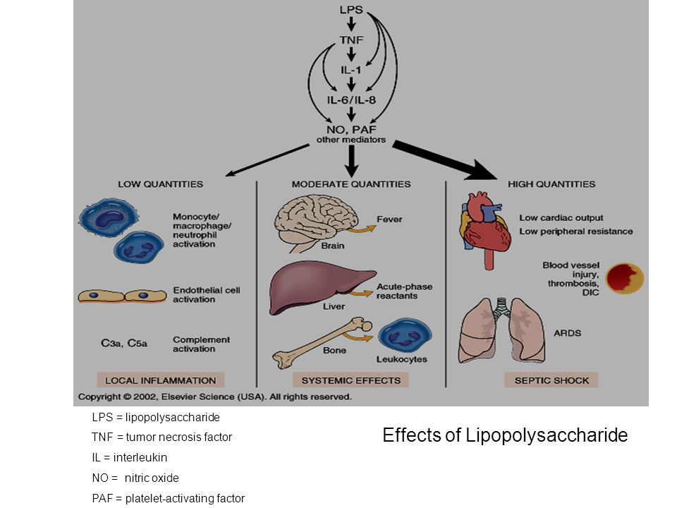 Effects of Lipopolysaccharide LPS = lipopolysaccharide TNF = tumor necrosis factor IL = interleukin NO = nitric oxide PAF = platelet-activating factor