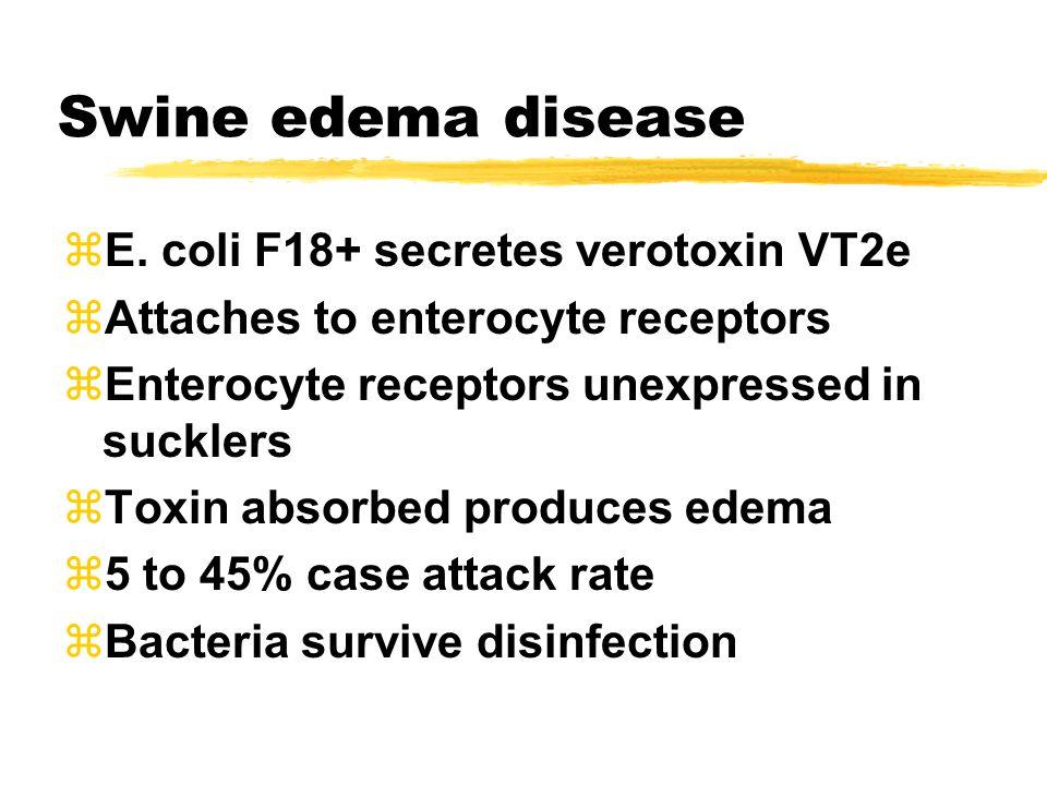 Swine edema disease zE.