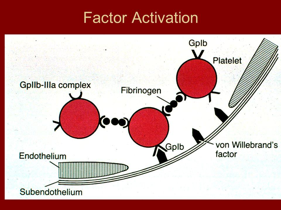 Factor Activation