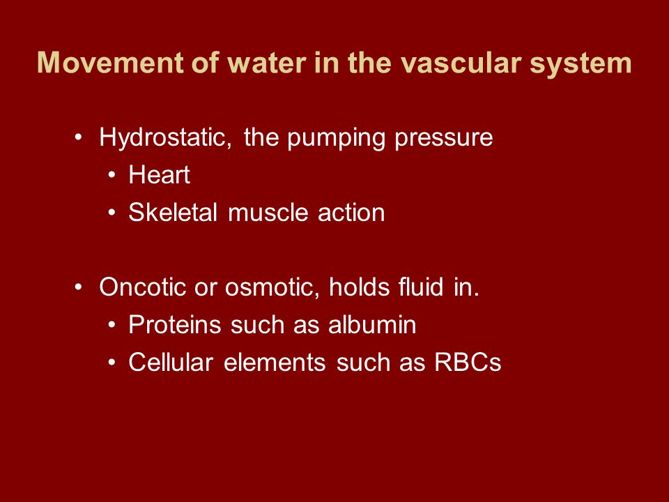 Intracellular & Extracellular Water