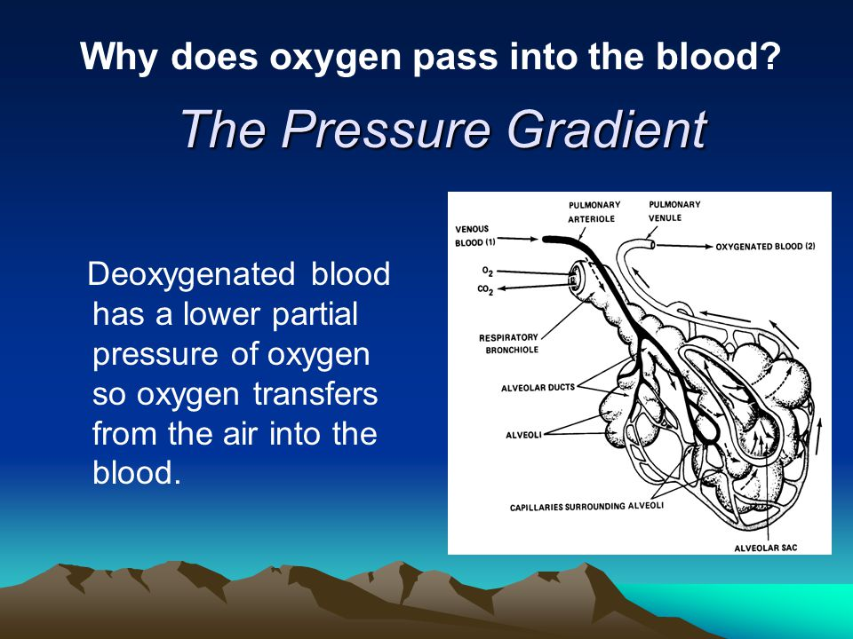 Why does oxygen pass into the blood? The Pressure Gradient Deoxygenated blood has a lower partial pressure of oxygen so oxygen transfers from the air