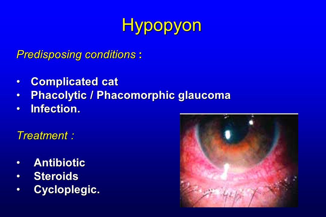 Hypopyon Predisposing conditions : Complicated catComplicated cat Phacolytic / Phacomorphic glaucomaPhacolytic / Phacomorphic glaucoma Infection.Infec