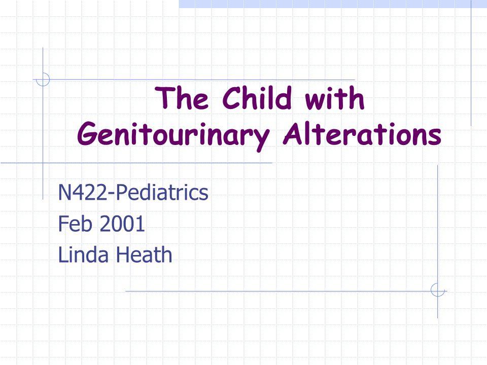 The Child with Genitourinary Alterations N422-Pediatrics Feb 2001 Linda Heath