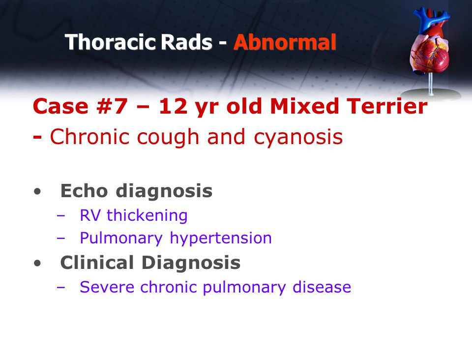 Thoracic Rads - Abnormal Case #7 – 12 yr old Mixed Terrier - Chronic cough and cyanosis Echo diagnosis –RV thickening –Pulmonary hypertension Clinical Diagnosis –Severe chronic pulmonary disease