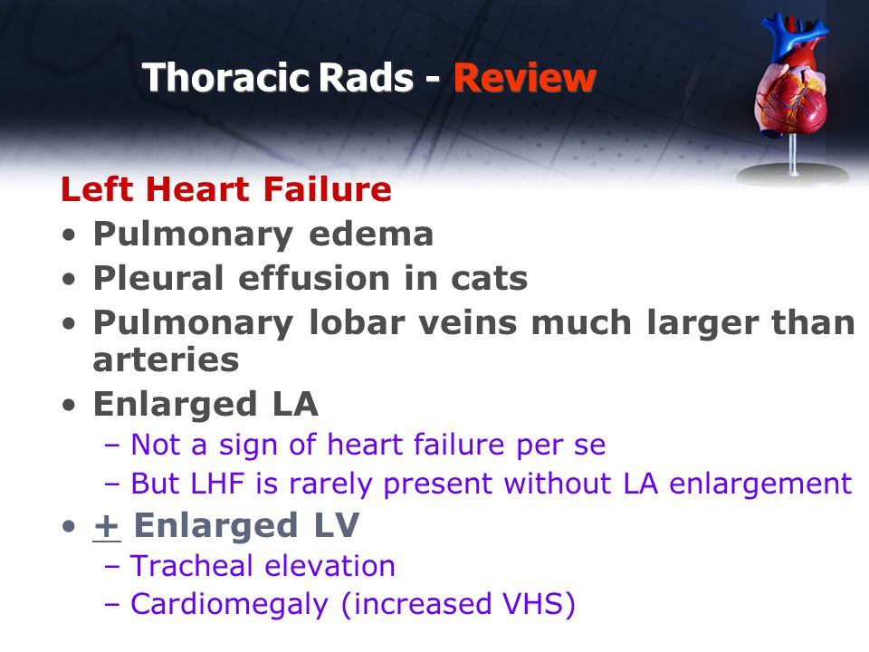 Thoracic Rads - Review Left Heart Failure Pulmonary edema Pleural effusion in cats Pulmonary lobar veins much larger than arteries Enlarged LA –Not a sign of heart failure per se –But LHF is rarely present without LA enlargement + Enlarged LV –Tracheal elevation –Cardiomegaly (increased VHS)