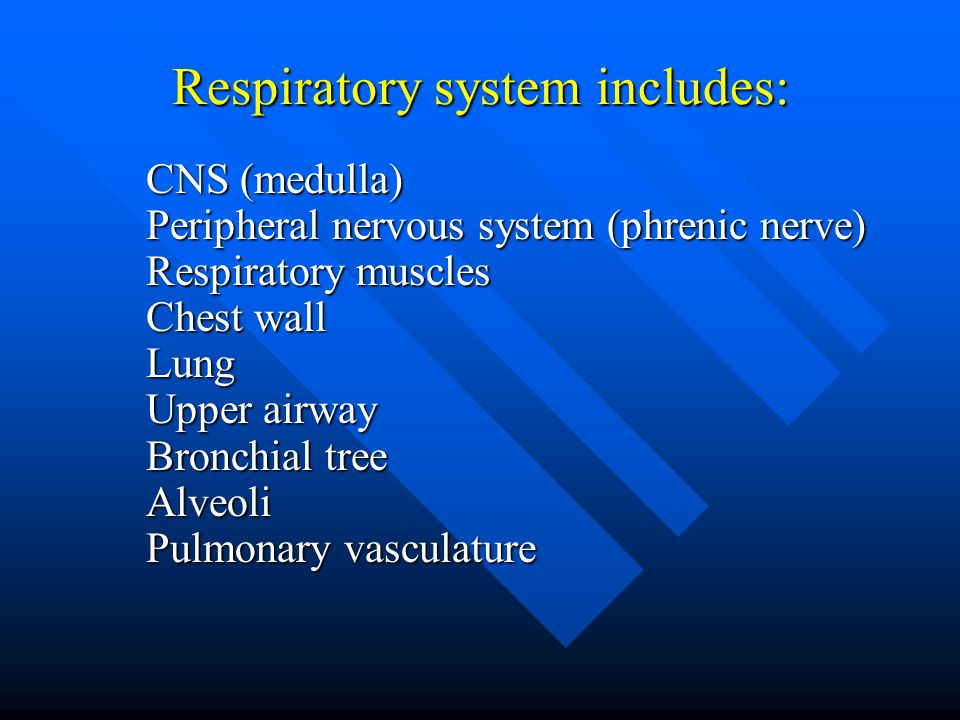 Respiratory system includes: CNS (medulla) Peripheral nervous system (phrenic nerve) Respiratory muscles Chest wall Lung Upper airway Bronchial tree Alveoli Pulmonary vasculature