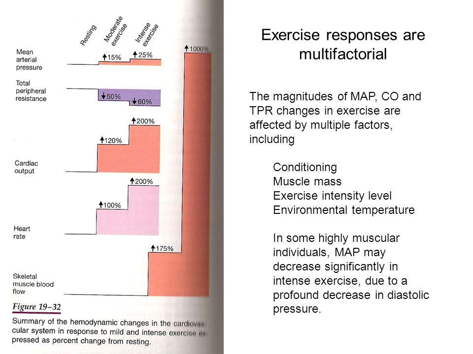 Exercise responses are multifactorial The magnitudes of MAP, CO and TPR changes in exercise are affected by multiple factors, including Conditioning Muscle mass Exercise intensity level Environmental temperature In some highly muscular individuals, MAP may decrease significantly in intense exercise, due to a profound decrease in diastolic pressure.