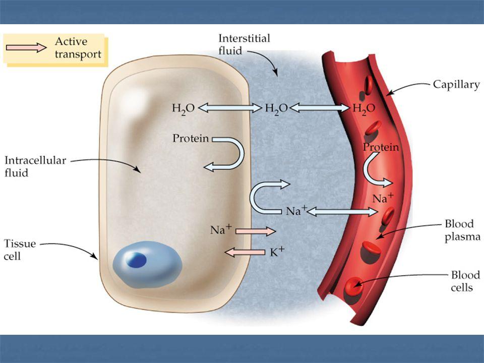 Venous Blood Pressure Muscular pump Muscular pump Respiratory pump Respiratory pump
