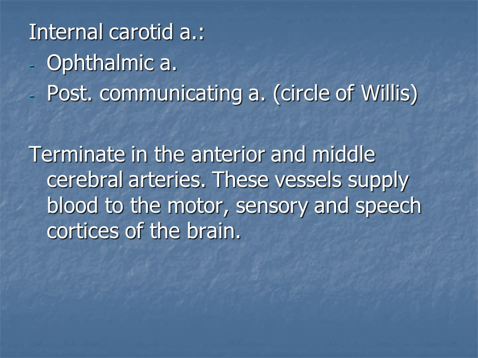Internal carotid a.: - Ophthalmic a. - Post. communicating a. (circle of Willis) Terminate in the anterior and middle cerebral arteries. These vessels