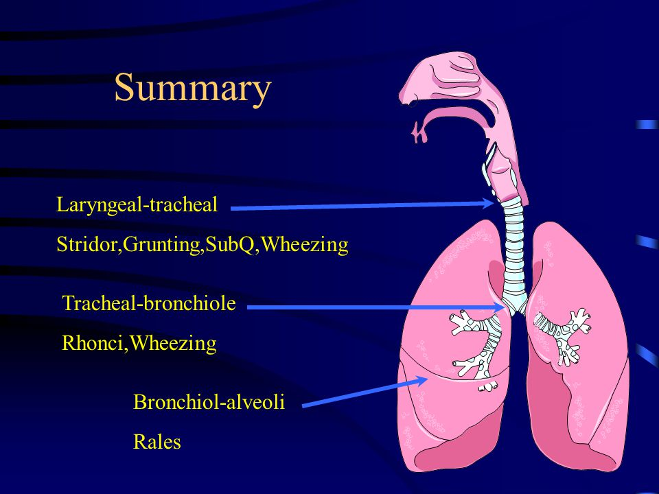 Summary Laryngeal-tracheal Stridor,Grunting,SubQ,Wheezing Tracheal-bronchiole Rhonci,Wheezing Bronchiol-alveoli Rales