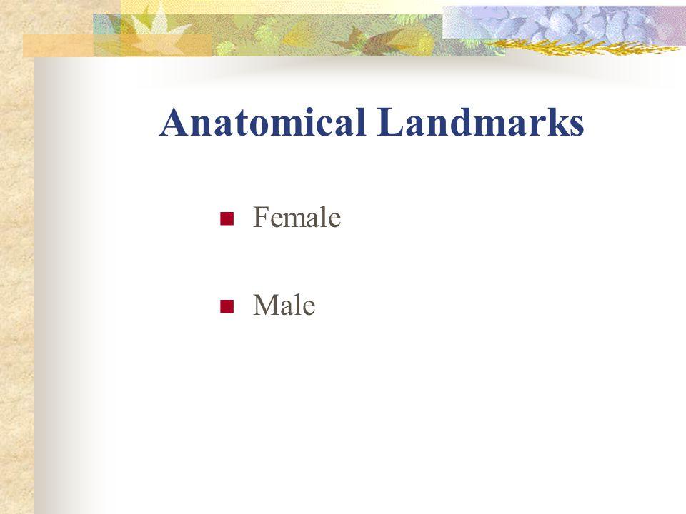 Anatomical Landmarks Female Male