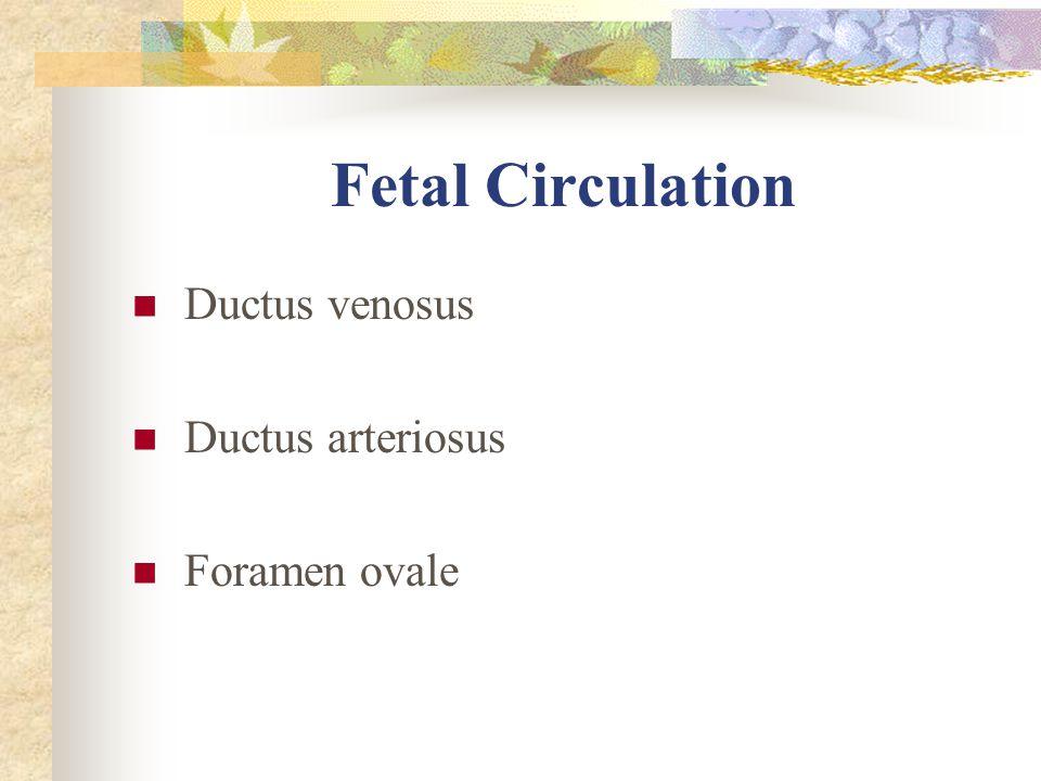 Fetal Circulation Ductus venosus Ductus arteriosus Foramen ovale