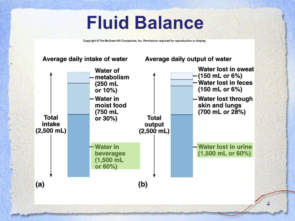 4 Fluid Balance