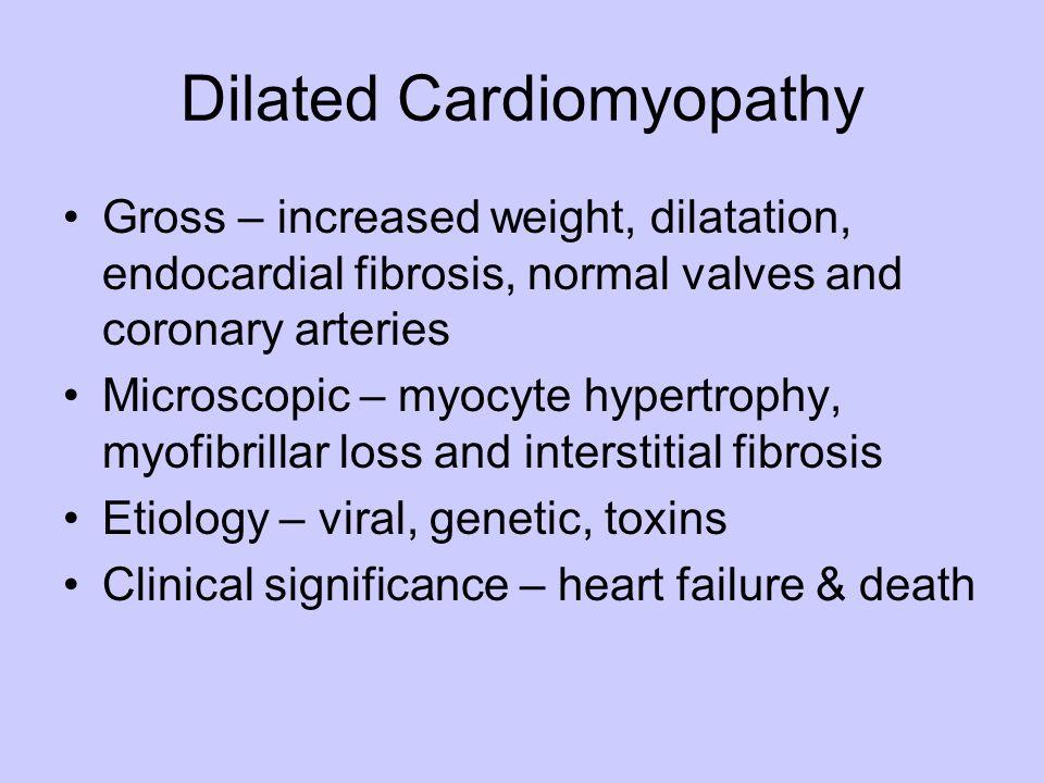 Dilated Cardiomyopathy Gross – increased weight, dilatation, endocardial fibrosis, normal valves and coronary arteries Microscopic – myocyte hypertrop
