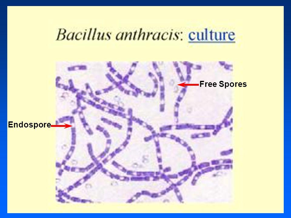 Endospore Free Spores