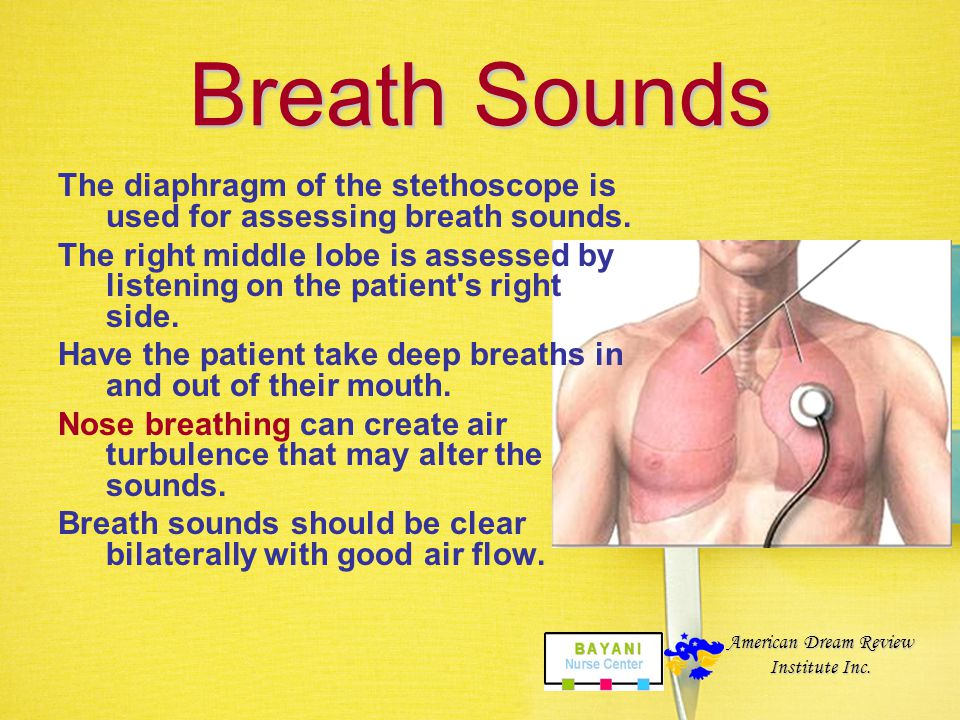 Pulmonary 12. Breath Sounds Assess anterior and posterior and from side to side, left to right lobe. Have patient take deep breaths, do not move steth