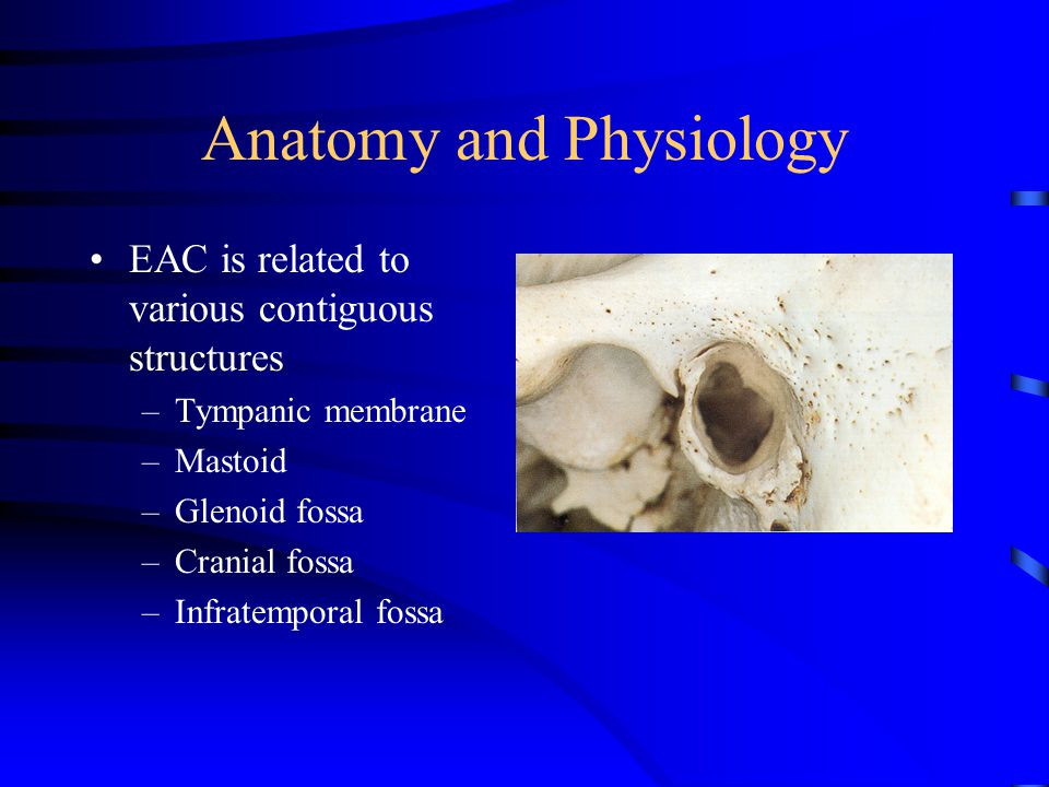 EAC is related to various contiguous structures –Tympanic membrane –Mastoid –Glenoid fossa –Cranial fossa –Infratemporal fossa