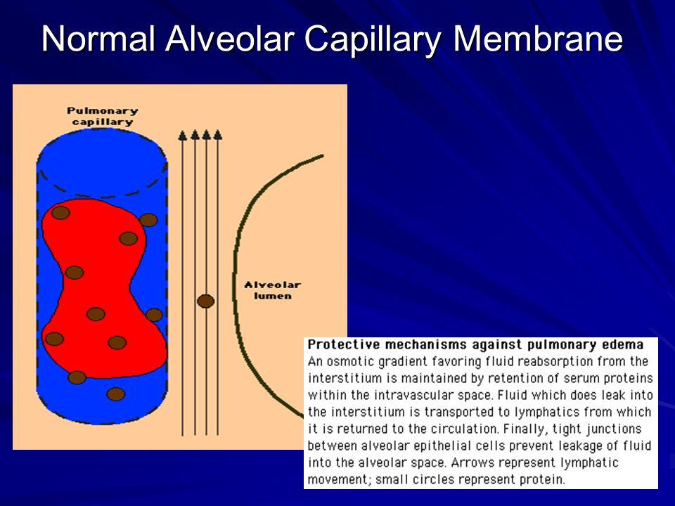 Normal Alveolar Capillary Membrane