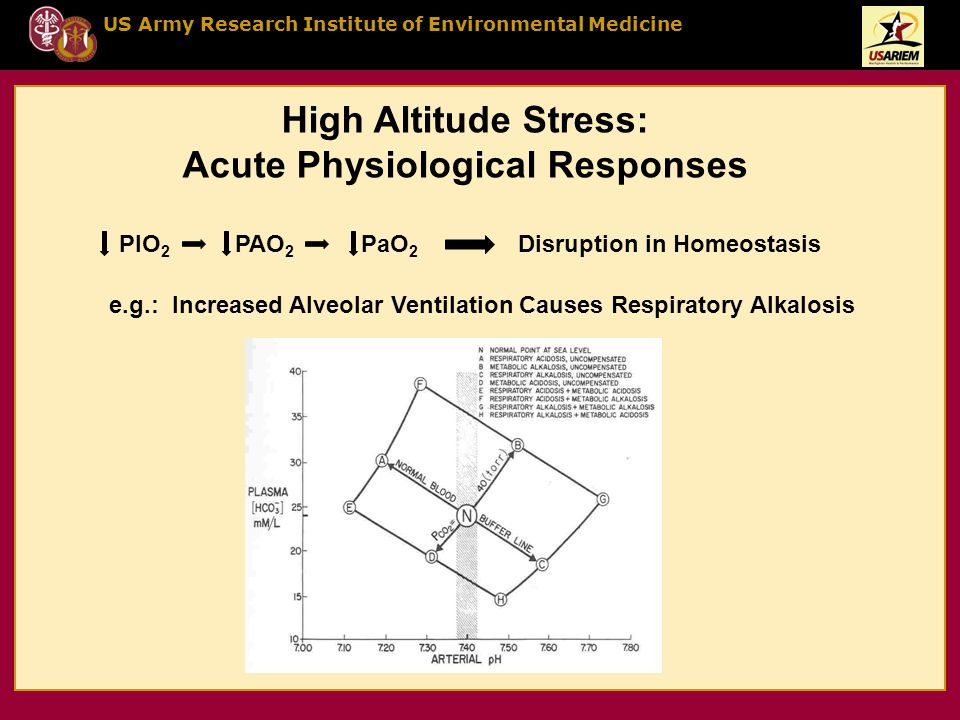 US Army Research Institute of Environmental Medicine High Altitude Stress: Acute Physiological Responses PIO 2 PAO 2 PaO 2 Disruption in Homeostasis e.g.: Increased Alveolar Ventilation Causes Respiratory Alkalosis