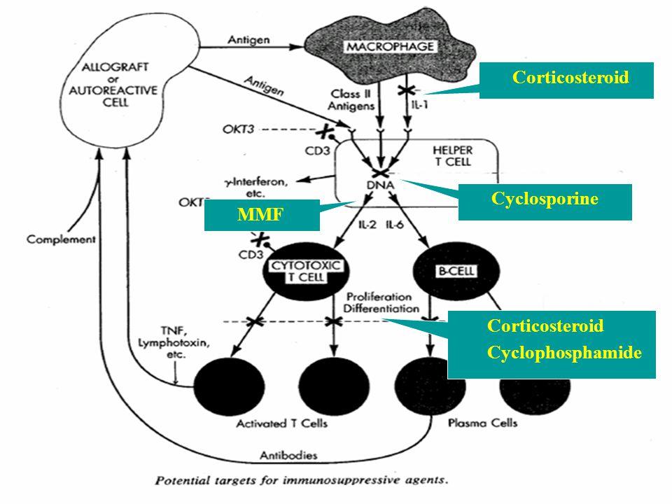Corticosteroid Cyclosporine Corticosteroid Cyclophosphamide MMF