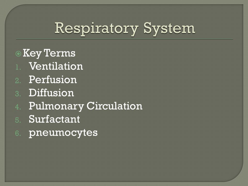  Key Terms 1. Ventilation 2. Perfusion 3. Diffusion 4.